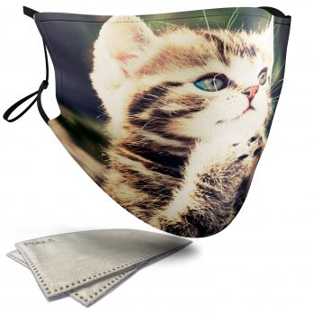Cute Begging Kitten – Adult Face Masks – 2 Filters Included